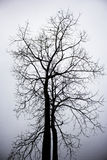 Dry death tree Stock Image
