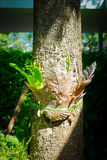 Dry decay brown leaf Royalty Free Stock Image