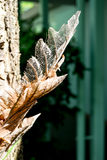 Dry decay brown leaf Royalty Free Stock Photo