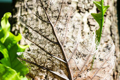 Dry decay brown leaf Stock Photography