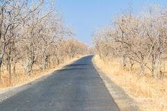 Dry Deciduous Forest and Tar Road in Summer. At the Forest of Central India Indore Madhya Pradesh stock photo