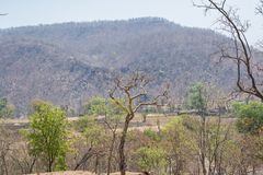 Dry Deciduous Forest and Vindhyanchal Hills. In Summer Season at the Forest of Central India Indore Madhya Pradesh stock photography