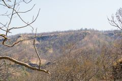 Dry Deciduous Forest and Vindhyanchal Hills. In Summer Season at the Forest of Central India Indore Madhya Pradesh royalty free stock images