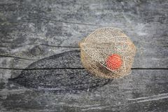 Dry decorative physalis berry Royalty Free Stock Photo