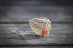 Dry decorative physalis berry Royalty Free Stock Photography