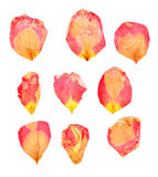Dry delicate  petals of pressed red and yellow rose Royalty Free Stock Photos