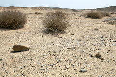 The dry desert Stock Image