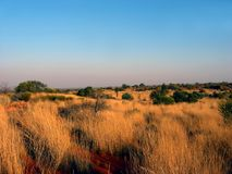 Outback Grass Plain Stock Image