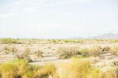 Dry desert landscape in Arizona Royalty Free Stock Images