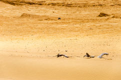Dry Desert Sands Royalty Free Stock Photos