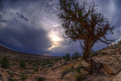 Dry Desert Tree Stock Photo