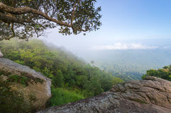 Dry dipterocarp forest in Thailand Royalty Free Stock Image