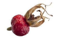 Dry dog rose fruit stock image