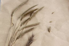 Dry ears of a grass. Stock Photos
