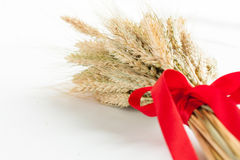 Dry ears of wheat and red ribbon Stock Photo