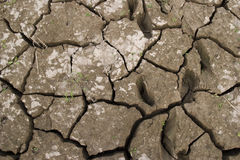 Dry earth. Because of lack of water ,huge cracks can be seen in the earth field,and little grass struggling for life Stock Image