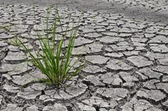 Dry earth Royalty Free Stock Images