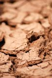 Dry earth. Brown dry earth or ground symbolizing climatical changes royalty free stock photography
