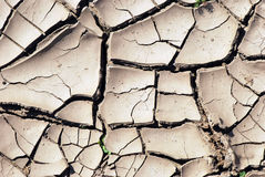 Dry earth background texture. Cracked and Arid Mud Ground Dry without water Stock Images