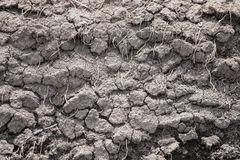 Dry earth. Close-up picture of dry earth with many dead plant roots in it Royalty Free Stock Image