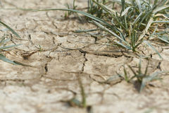 Dry earth with cracks stock photography