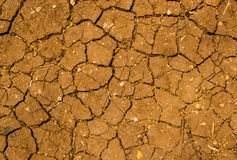 Dry earth Stock Image