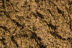 Dry earth ground Stock Photography