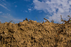 Dry earth ground. Mix with tree roots on sky background Stock Image