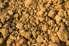 Dry earth ground texture Stock Photos