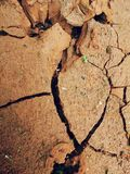 Dry earth growing green plants stock photos
