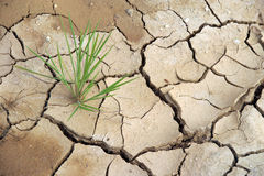 Dry earth (plant surviver) Stock Image