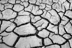 Dry earth texture. Cracked dry earth texture shot directly from above Royalty Free Stock Image