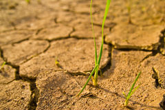 Dry earth texture stock photography