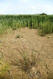 Dry earth, wind turbines. Stock Image