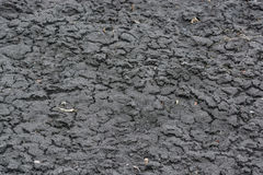 Dry fall ground with cracks stock image