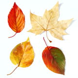 Dry fall leaves Stock Images