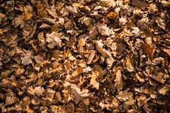 Dry Fall Leaves Stock Photo
