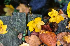 Dry fall off leaves as foliage carpet on a wooden board surface royalty free stock image