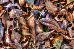 Dry Fallen Autumn Leaves Background in HDR High Dynamic Range Stock Image