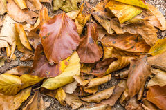 Dry fallen leaves Royalty Free Stock Images