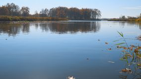 Dry fallen Leaves on the water of the autumn lake stock footage