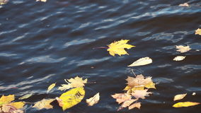Dry fallen tree leaves in river stock video