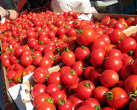 Dry farmed early girl tomatoes. At the sf farmer's market Royalty Free Stock Photography