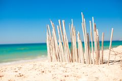 Dry fence of reeds on a deserted coast in Faro,. Portugal. See my other works in portfolio Stock Image