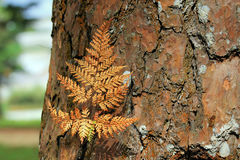 The dry fern leaf on bark. The dry fern leaf on brown bark stock photography