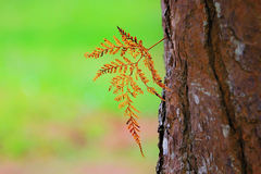 The dry fern leaf on bark Stock Photos
