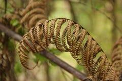 Dry Fern Leaf Royalty Free Stock Photography