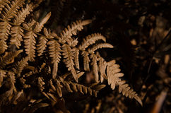 Dry fern leaves in forest Stock Photography