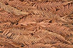 Dry Fern Texture Stock Photo