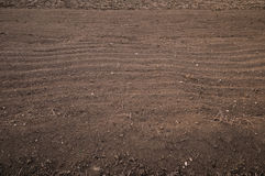 Dry field stock images